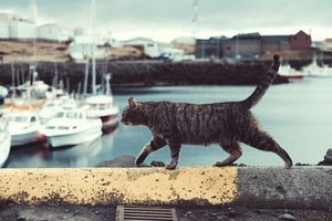 Cat in a bay