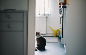 Cat in a kitchen