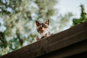 Cat peeking above the roof