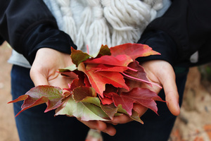 Dried leaves in hands