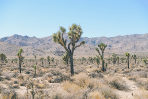 Plants in desert