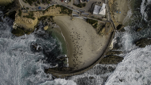 Air view of beach with seals