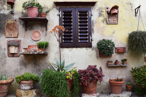 Potted plants by the window