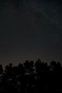 Stars above trees