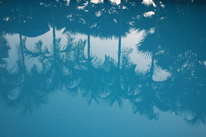 Palms reflection on water