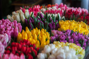 Colorful tulip bouquets
