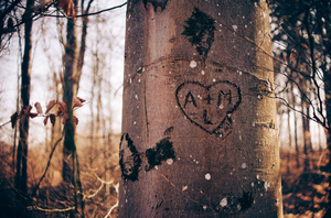 Written in the tree