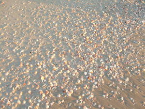 Shells on the beach image