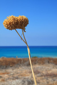 Dried flowers outdoors