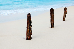 Corroded sticks on the sandy beach