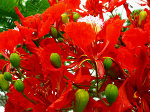 Red exotic flowers