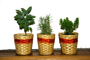 Herb pots on wood