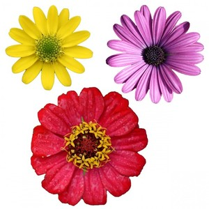 Isolated flowers clipart