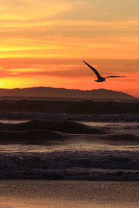 Sunset on the beach with the seagull