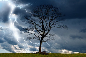 Lightning and a tree