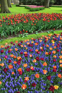 Flower park with tulips