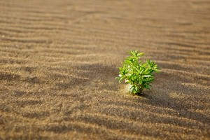 Green plant in the sand