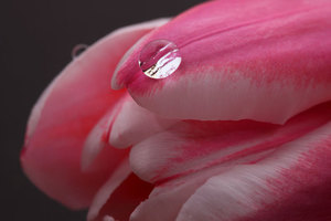Water drop on a flower