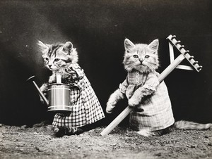 Photo vintage de chats habillés