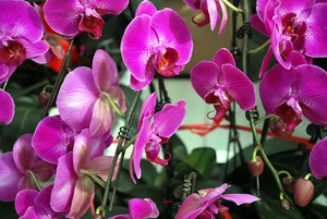 Purple orchids displayed