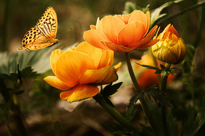 Yellow orange flowers and butterfly