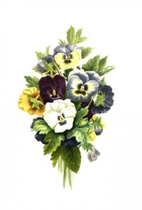 Pansies painting isolated