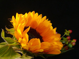 Sunflower arrangement macro photo