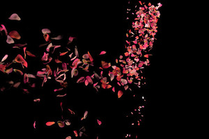 Rose petals falling to the floor