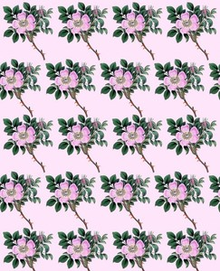 Ornamental flower background