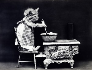Vintage photo of a cat wearing a dress
