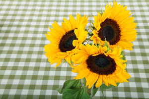 Sunflowers in vase close up