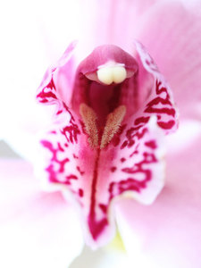 Lovely orchid close up