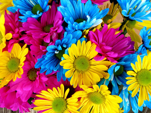 Colorful daisies macro photo