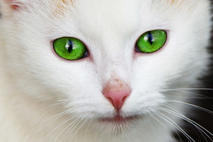 Green - eyed chat