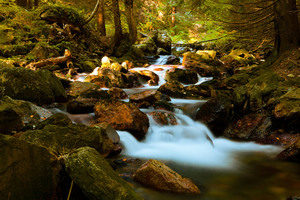 Mountain Stream In Forest