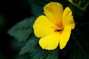 Yellow flower macro photo