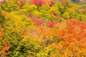 Colorful forest trees