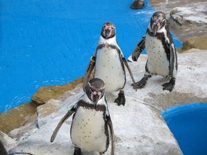 Group of penguins in zoo