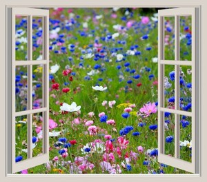 Flowers with window frame
