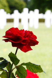 Red rose with crosses in background