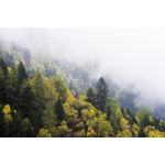 Mountain forest in fog