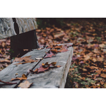 Wooden bench in leaves