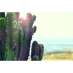 Cactus in the sun