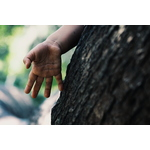 Kid's hand on tree