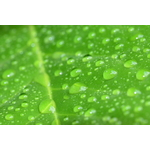 Drops on green leaf