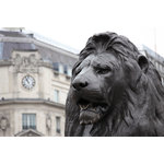Lion On The Trafalgar Square
