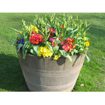 Potted spring flowers
