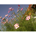 Panoramic flowers in the sun