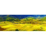 Yellow rice fields
