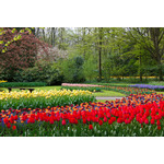Colorful flowerbeds in park
